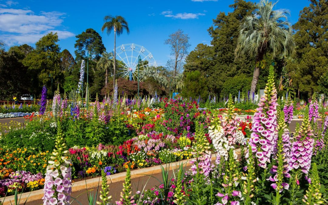 A Blooming Good Time! Toowoomba Carnival of Flowers 2020 a Success